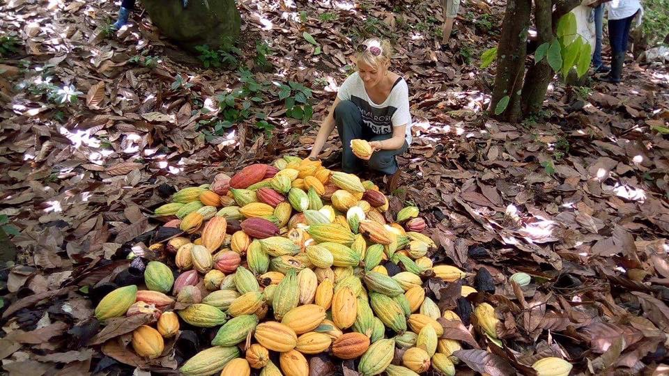 kakaoubade koristusel