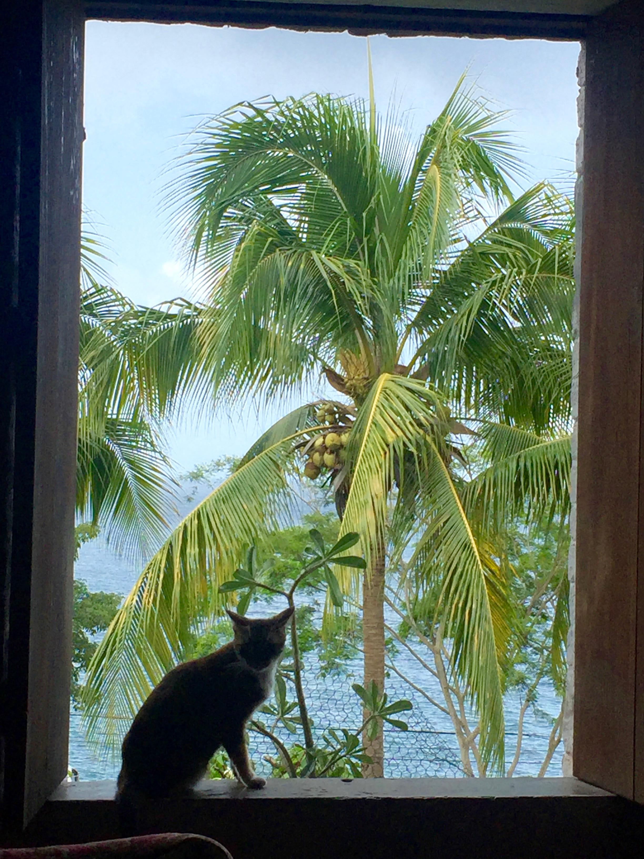 kass ja kookospalm