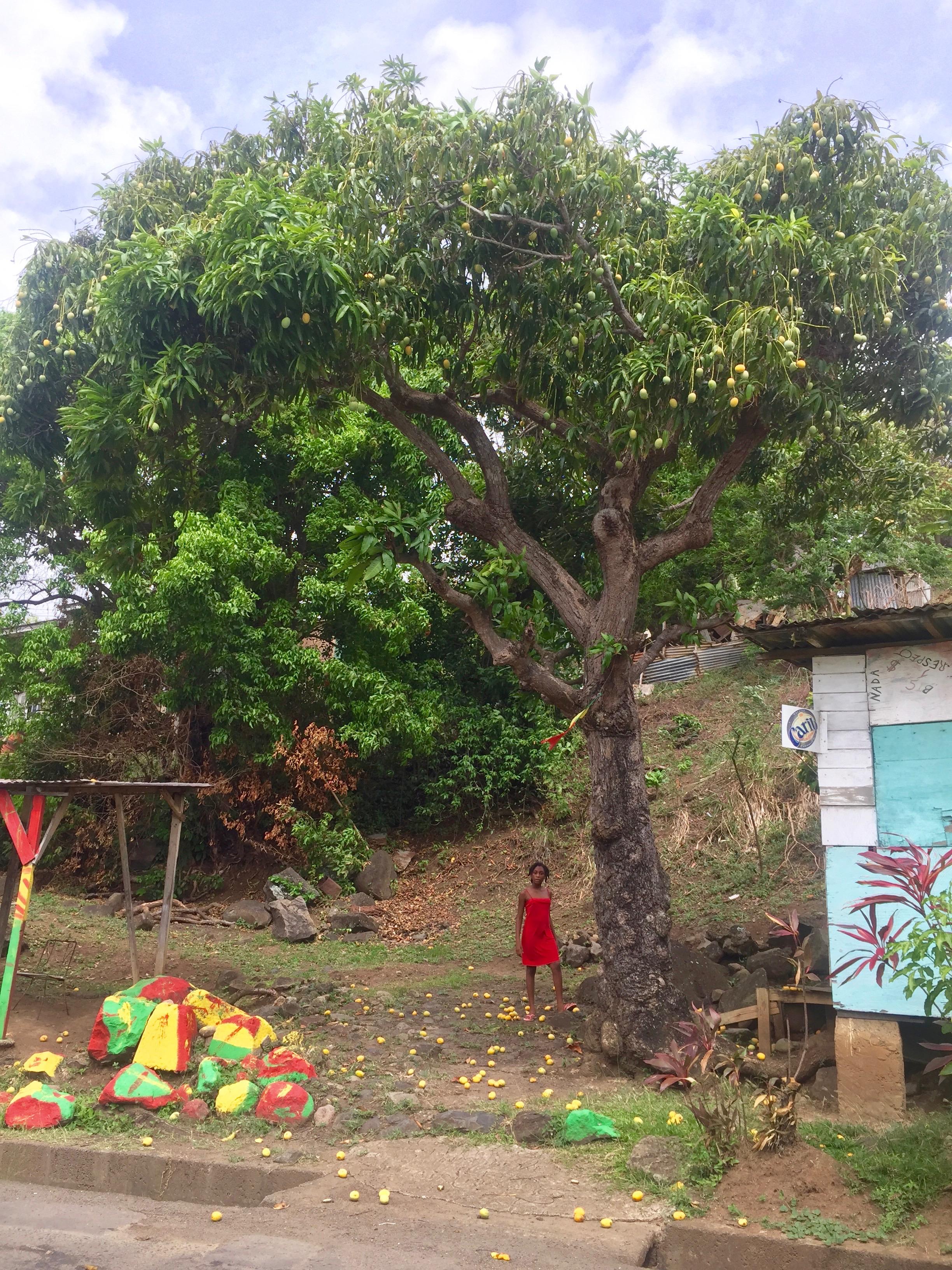 mangopuu ja tüdruk unases kleidis