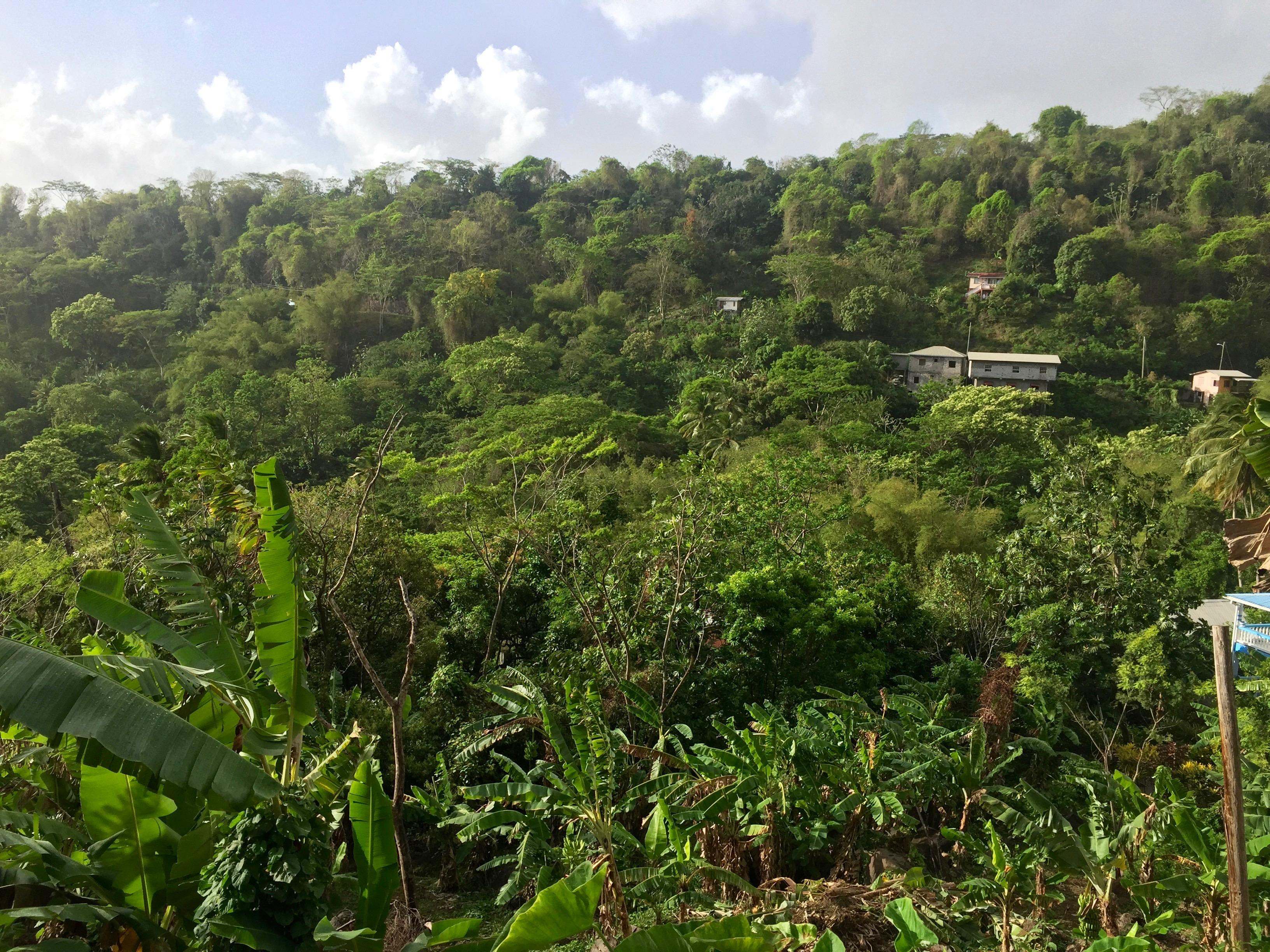 lopsakad vihmametsad